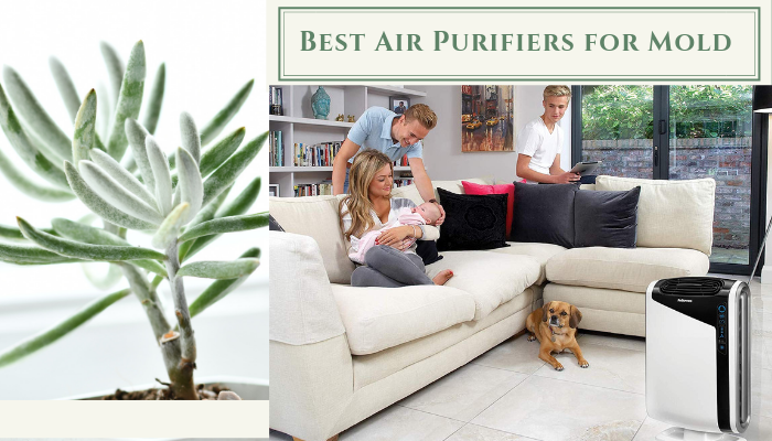 Top 10 Best Air Purifiers for Mold – Ultimate Reviews and Buying Guide