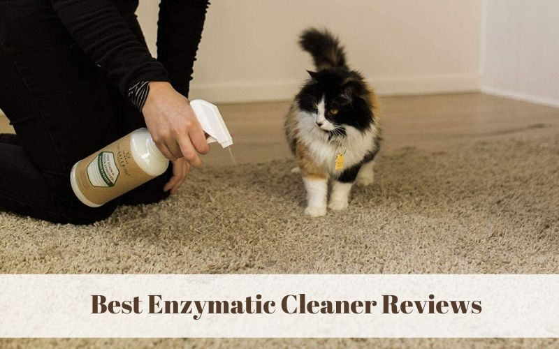 Best Enzymatic Cleaner